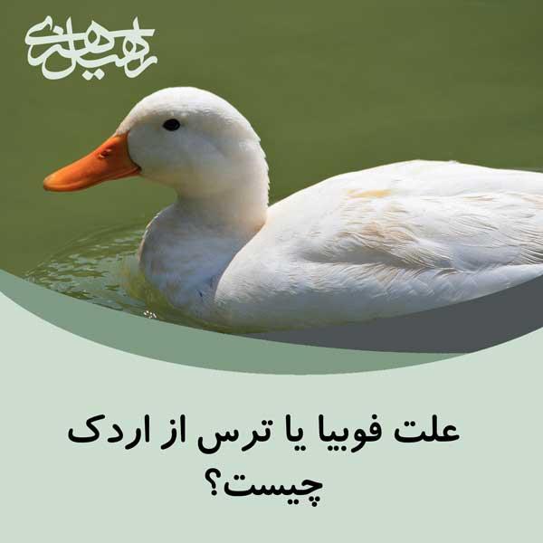 علت فوبیا یا ترس از اردک چیست؟
